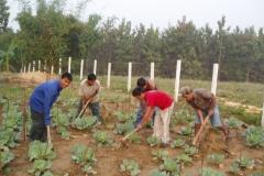 gardening-at-vidima