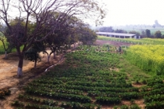 newland-panorama-gurgaon-7-2-2012